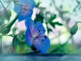 flowers blue by odina222