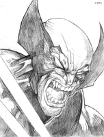 WOLVERINE by DRAKEFORD