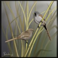 Bearded reedlings by Emberiza