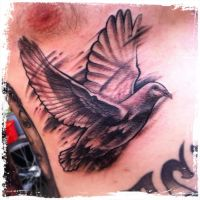 Dove on belly by WillemXSM