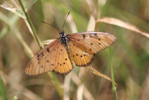 Butterfly 01 by syoul-stock