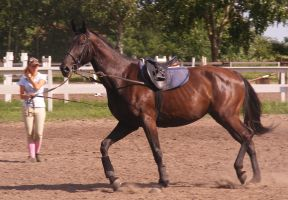 Dark bay mare stock 11 by LadyAyslinn