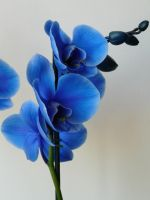 Blue Orchid 2 by KRSDeamon