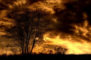 In flames by Beezqp