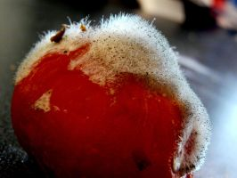 Hairy Rotten Tomato by NuagePluie