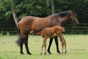 Frieda and foal Stock 1 by Saerl