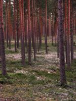 Forest by jusuart-stock
