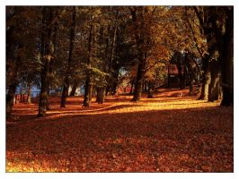 Autumn by aniabeata