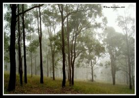 Mist In The Morning by BreeSpawn