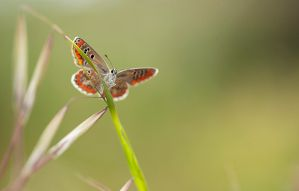 First butterfly from 2013 by buleria