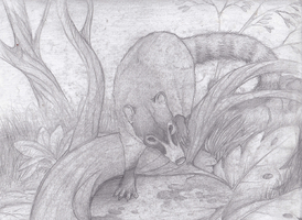 White-nosed Coati Sketch by Forbidding