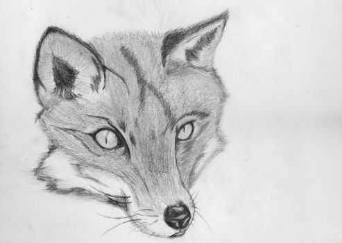Fox Pencil Sketch by Nelson96