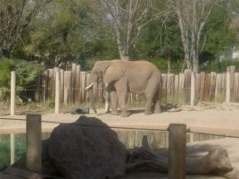 African Elephant by SquirrelWitch