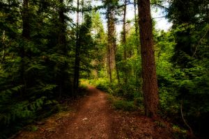Forest Stock 7 by mindym306