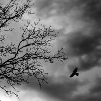 flying to freedom by QUEEN-OF-LONELESS