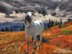 Andalusian for HP by JuneButterfly-stock
