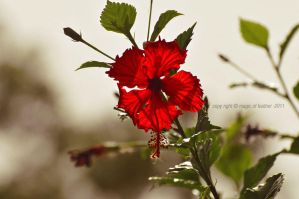 red flower by Magic-Of-Feather