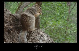 Squirrel 2 by timvdam