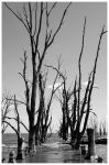 dead trees corridor in BW by michref