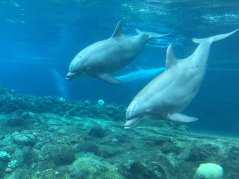 Even More Dolphins!! by TheAverageKid