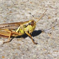 Differential Grasshopper by Chexed