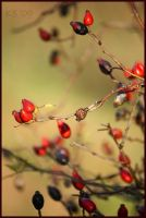 Autumn 2 by siskin