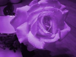 Purple Rain Purple Rain by LovelyBPhotography