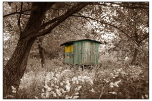 Beehive by tomsumartin