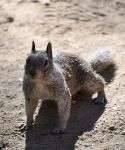 Curious squirrel... is curious by Zavitala