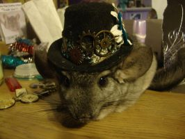 steam punk chinchilla by the-muffin-lord