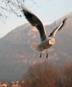 Gull of the lake by niko-n-photography