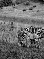 Black and White by StormPetral0509