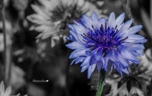 Blue for you by gigi50