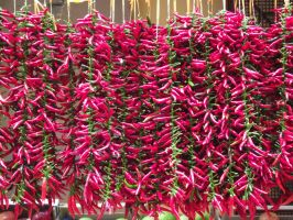 Red hot chilli peppers for sale by rbompro1