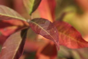 Herbst 09 by Silas89