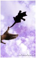 My cat fly . by c0uccinellE