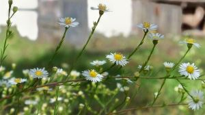 Daisy Chain by MadGardens