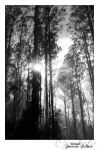 The Black Spur by opelate
