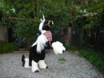 Gypsy Vanner by LilleahWest