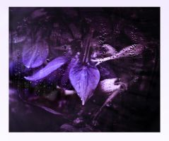 Purple Rain by GeminiArtNStock