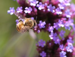 Bee by fl8us-stock