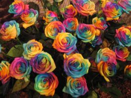Rainbow Roses by janine42584