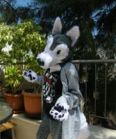 first fursuit 2 by rz250