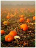 The Pumpkin Patch by Drazed