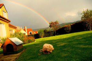 Dog and Rainbow by bleachfan789