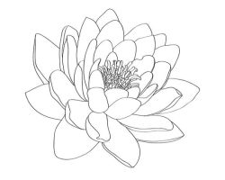 Water Lily Tattoo Design by selective-universe
