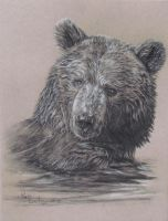 May 29 bear sketch by Earleywine