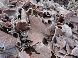 Frozen Leaves 02 :: Stock by Selunia
