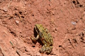 frog I by mimose-stock