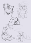 Otter Sketches by Ueichi